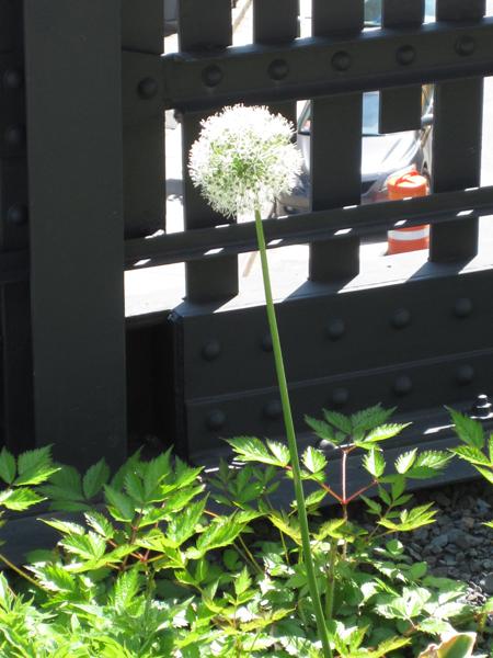 plant2small