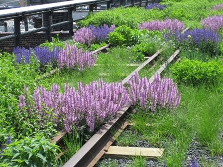 purple flowers - small